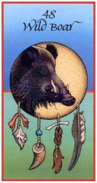 Wild Boar (Medicine Cards)