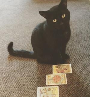 Black cat with tarot cards